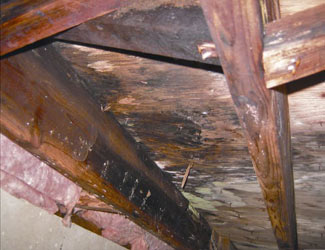 mold and rot in a Brevard crawl space