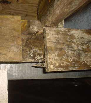 Extensive basement rot found in Sylva by Dry Crawl Spaces