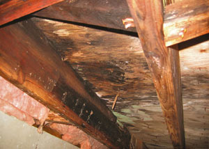Extensive crawl space rot damage growing in Highlands