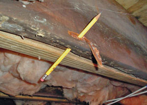 Destroyed crawl space structural wood in Balsam